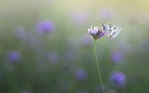 Картинка макро, фон, бабочка, луг, насекомое, цветочек, обои от lolita777