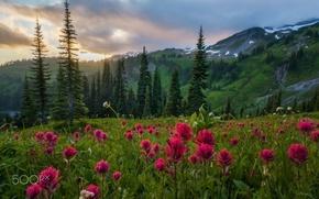 Картинка лес, лето, цветы, горы