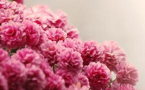 Картинка вода, капли, цветы, букет, розовые, мелкие