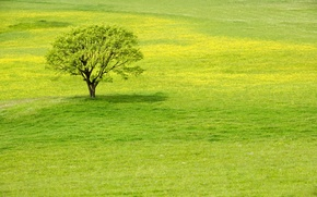 Обои зелень, трава, дерево