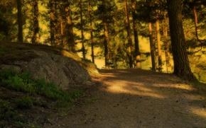 Картинка дорога, лес, солнце, свет
