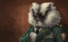 Обои кот, рисунок, награды, генерал, погоны