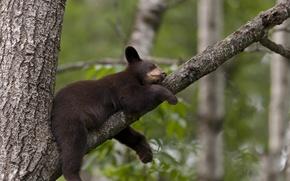 Картинка дерево, мишка, спит
