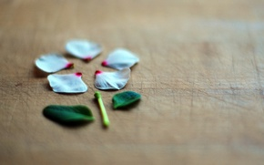 Картинка цветок, макро, стиль