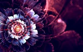 Картинка цветок, лучи, абстракция, графика, свечение, фрактал