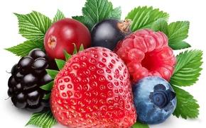 Картинка ягоды, малина, клубника, смородина, ежевика, голубика
