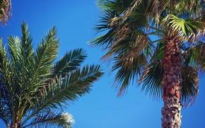 Картинка небо, листья, деревья, пальмы