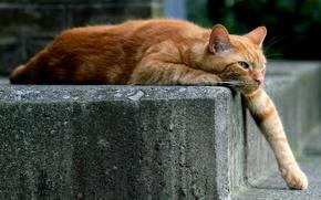Картинка кошка, лежит, лапа, рыжий, кот