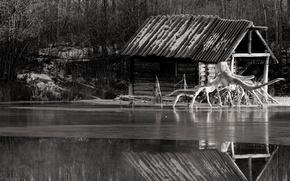 Картинка река, корень, черно-белая