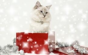 Картинка кошка, коробка, новый год, мишура