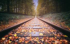 Обои дорога, осень, листья