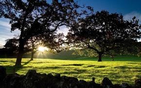 Картинка рассвет, New Zealand, Cornwall Park