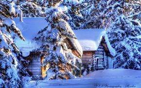 Картинка Аляска, ели, снег, зима, хижины, природа, лес