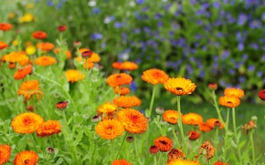 Картинка природа, лепестки, сад, стебель, луг, клумба