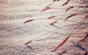 Обои зима, макро, снег