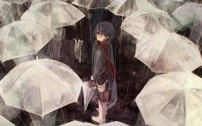 Картинка кошка, кот, люди, дождь, толпа, зонт, арт, зонтики, vocaloid, hatsune miku