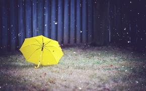 Картинка трава, желтый, зонт, двор