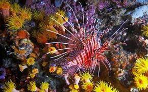 Картинка рыбка, кораллы, подводный мир