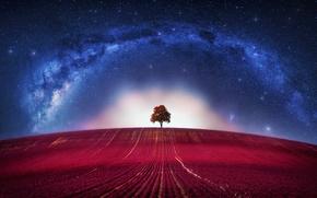 Картинка Fantasy, Avatar, Clouds, Loneliness, Horizon, Tree, Galaxy, Lone, Way, Milky, Lonely