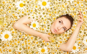 Картинка взгляд, девушка, цветы, ромашки, camomiles
