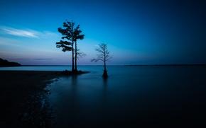 Картинка море, ночь, дерево