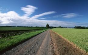 Обои деревья, поле, облака, Дорога
