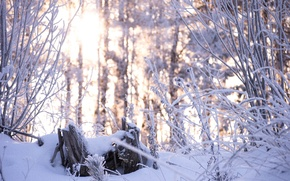Картинка зима, лес, снег, деревья, природа, красота, Morgendorffer