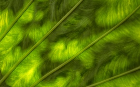 Картинка зелень, лист, цвет, текстура