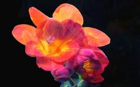 Картинка цветок, линии, краски, лепестки