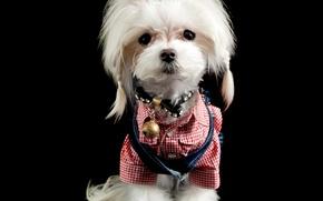 Картинка собака, милый, щенок