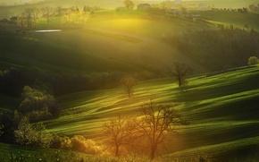 Картинка деревья, холмы, поля, дома, Альба, утро, Италия