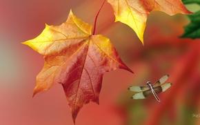 Картинка макро, природа, лист, коллаж, стрекоза