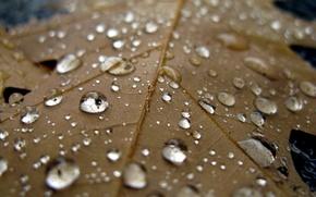 Картинка вода, капли, макро, лист, дождь, прохлада, осен