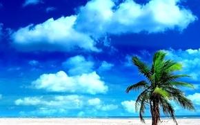 Обои песок, небо, пальмы