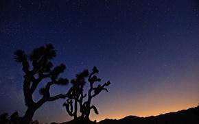 Картинка космос, звезды, деревья, ночь