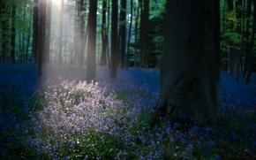 Картинка лес, свет, цветы, утро