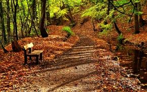 Картинка осень, вода, природа, дорога, деревья, река, листья