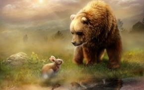 Картинка животные, утро, медведь, отражение, свет, вода, луг, заяц, встреча