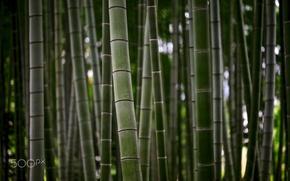 Картинка природа, стебли, стволы, текстура, бамбук