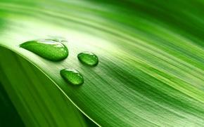 Картинка зелень, макро, лист, роса, капля