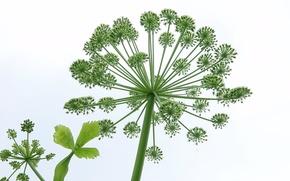 Картинка цветок, природа, растение, стебель