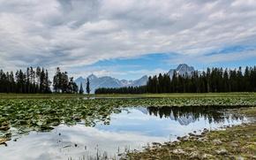 Картинка зима, небо, листья, облака, деревья, горы, озеро, болото, сша, wyoming, grand teton national park