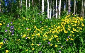 Картинка лес, природа, пейзажи