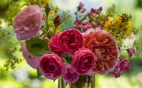 Обои розы, букет, боке