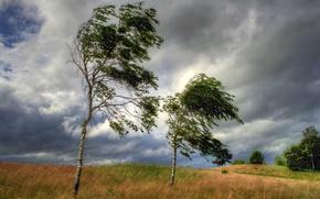 Обои небо, тучи, ветер, поле, деревья