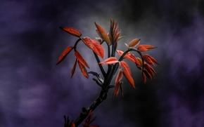 Картинка листья, фон, растение, ветка