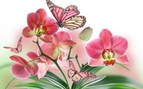 Картинка цветок, природа, бабочка, лепестки, орхидея