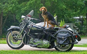 Картинка Собака, Harley, Мото, Настроение.