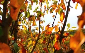Картинка листья, Осень, Жёлтый, Зелёный, Чистое небо