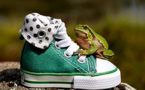 Картинка обувь, кеды, лягушка